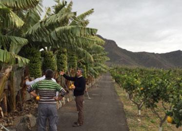 MC BIO – JORNADAS TÉCNICAS PLÁTANO , TOMATE, CÍTRICOS Y OLIVO[ Islas Canarias ]